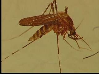 West Nile Virus found in Summit County
