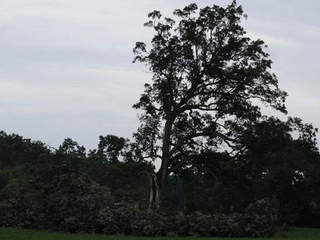Shawshank Redemption tree knocked down by 'wind'