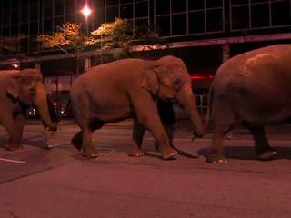Elephants to parade down Cleveland streets to open circus