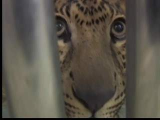Exotic animals testing