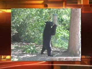 Portage County bear sightings