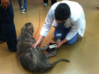 Wyatt walks in new prosthesis_20120920123654_JPG