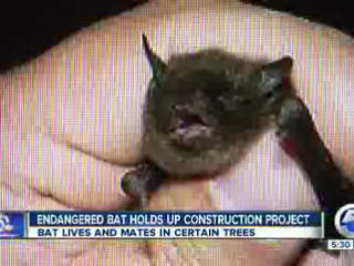 Crocker Park project delayed for bats