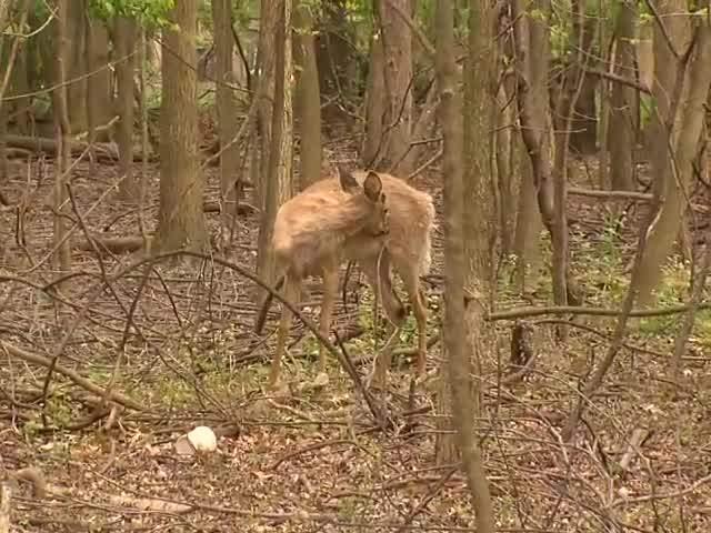 Deer Killed