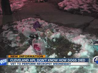 Three dead dogs found in food bags