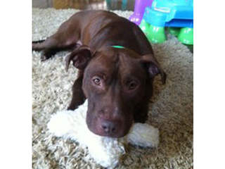 Missing dog Sienna_20130122122606_JPG