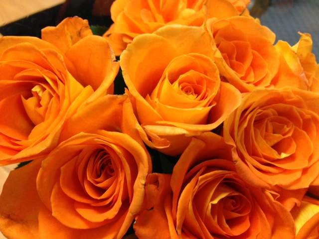 Image gallery orange roses meaning for The meaning of orange roses