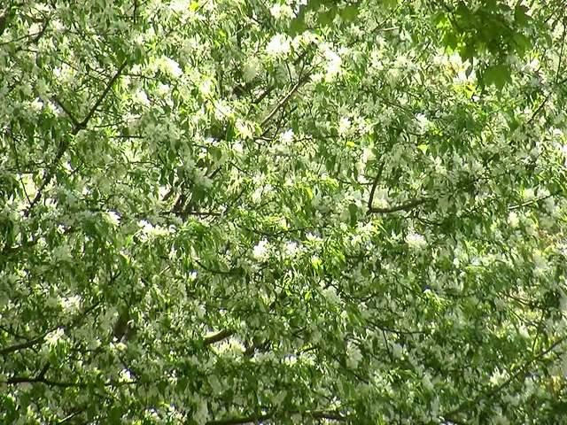 Ragweed Allergy in Spring Grass Ragweed Allergies
