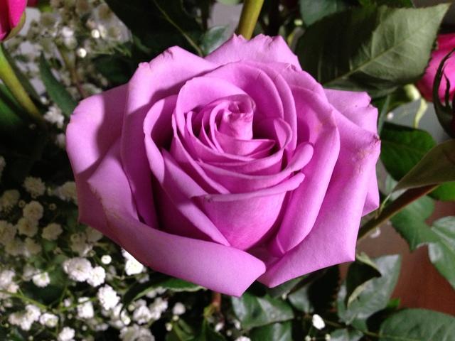 roses1_1391709255635.JPG