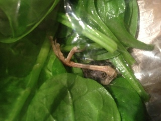 'Fowl' Discovery: Bird leg found in spinach bag