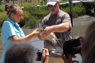 RTM: Tour group watches captain rescue wild bird