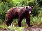 Grizzly kills person near National Park