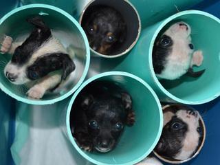 PICS: Adorable solution to rare puppy disorder