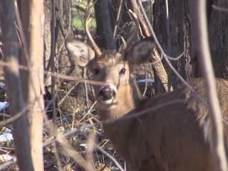 Lottery sign up begins for Metroparks deer hunt