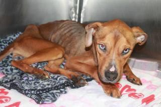 Akron vets nursing emaciated dog back to health