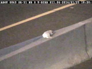 Scared puppy rescued from Arizona freeway