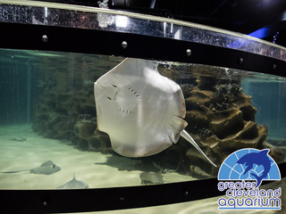 WIN a great experience at the Cleveland Aquarium