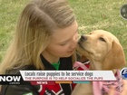 Locals raise puppies to be service dogs