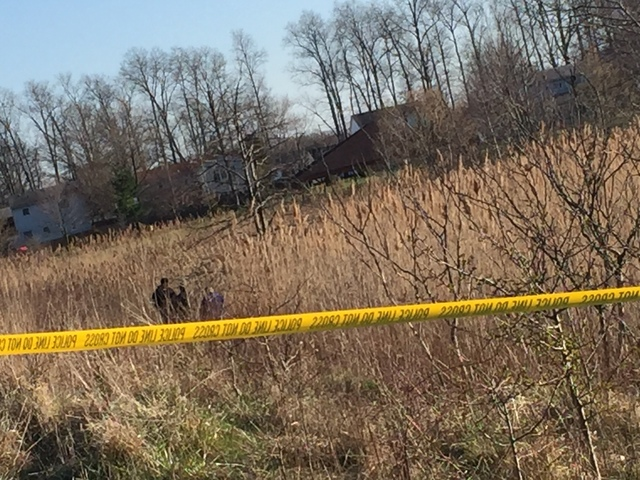 Human remains found in woods behind Parma Toys R Us, police reported.