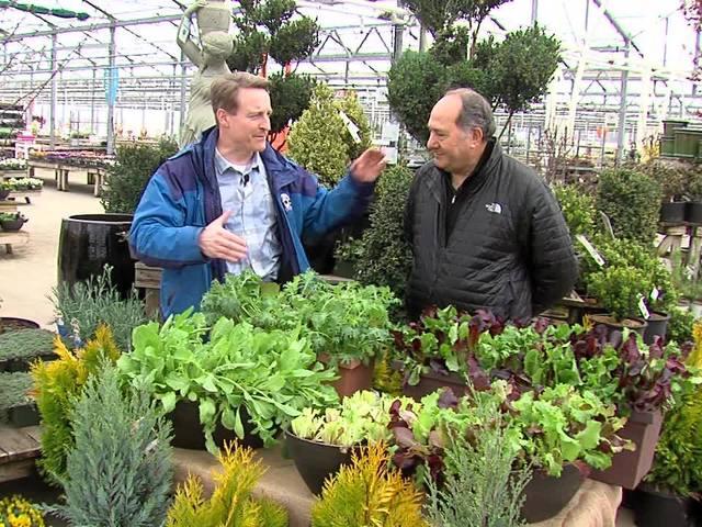 Container veggie gardening