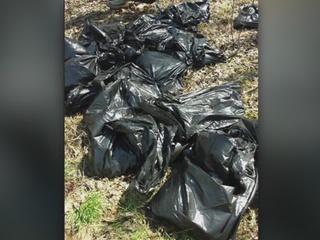 22 dead dogs dumped in Ashtabula County