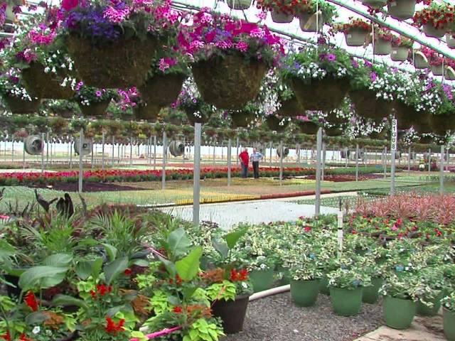Angelo's fabulous greenhouse