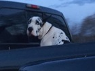 Teen posts pictures, angry about dog in truck