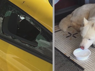 Dog recovering after being left in hot car