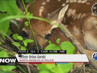 Wildlife officials: Leave deer and fawns alone