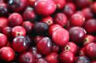 STUDY: Cranberry juice could prevent UTIs