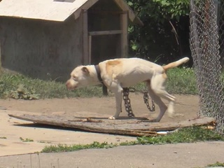 Lorain's dog tethering law helps chained up pets