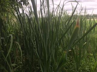 Mentor residents upset over marsh weed spraying