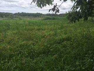 Helicopter sprays weed killer over Mentor Marsh