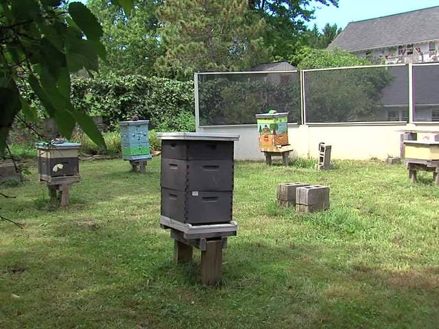 Are honey bees making a come back in Northeast Ohio?