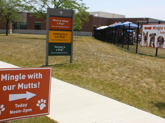 Distemper Outbreak Prompts Euthanizations At County Dog Shelter