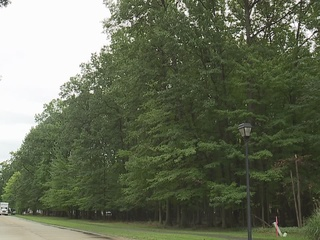 Avon Lake residents may not lose woods after all