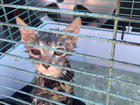 Three kittens rescued from sweltering vehicle