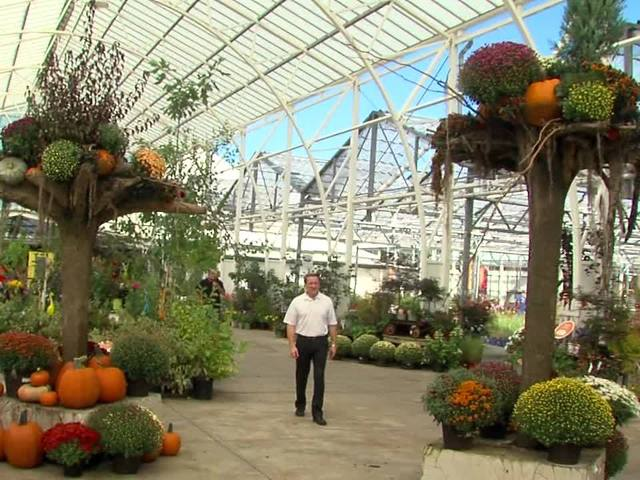 Shrubs & perennials for Fall Color