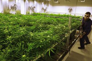 CLE Council places moratorium on marijuana
