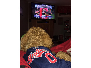 PHOTOS: Tribe dogs