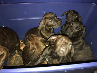 Puppies found in plastic box along Turnpike