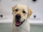 America's 10 favorite dog breeds named