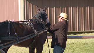 Some Amish taxi drivers claim profiling