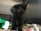 Cat with 1 ear is the star of Humane Society