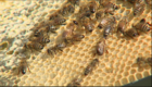 The bee problem? In part, neonicotinoids