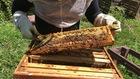 The resurgence of beekeeping in urban areas