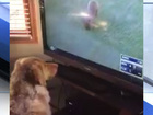 VIDEO: Dog captivated by squirrel at Tribe game