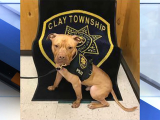 Pit bull K9 becomes first in Ohio
