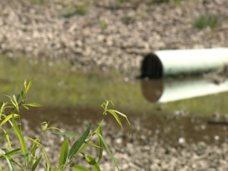 Could dog park pond be making dogs sick?