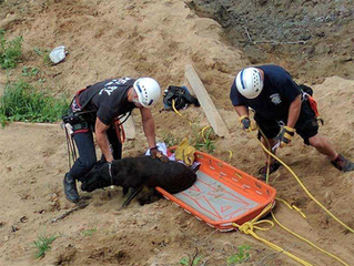Fire crews rescue dog that fell down embankment